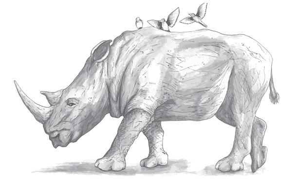 Riding the Rhino